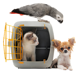 Pets around carrying case