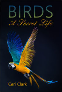 Birds front cover only - 600px