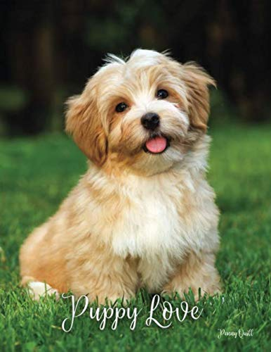 Puppy Love: A Disguised Password Book With Tabs to Protect Your Usernames, Passwords and Other Internet Login Information   8.5 x 11 inches (Quill Password Books)