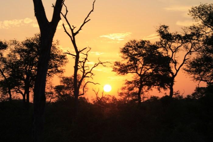 Coucher de soleil dans le bush