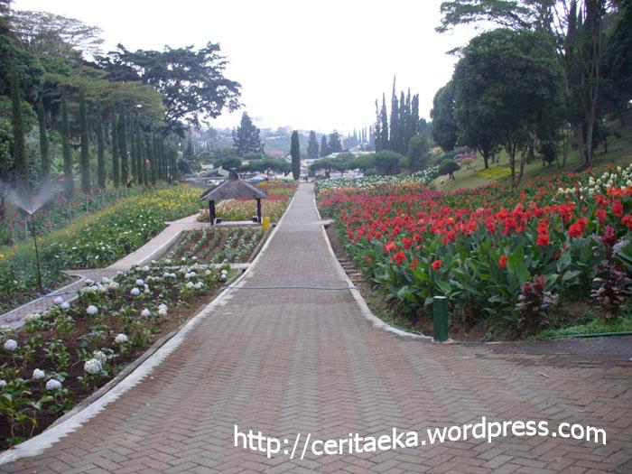 Taman Bunga Selecta 6
