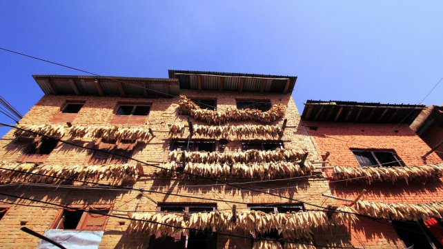 Dried Corn on the Wall