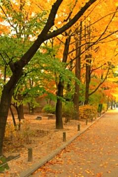 Autumn in Deoksugung