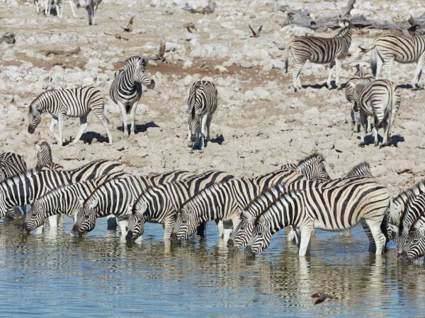 They're Watching You: Watering Hole Attack