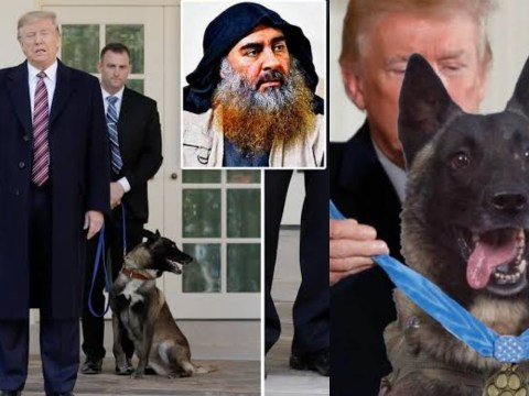 Trump honors Conan the hero dog at white house