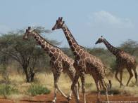 Kenya014