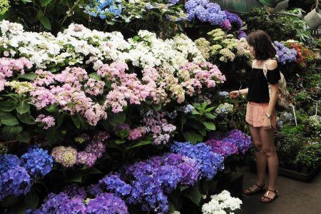 Mercados de flores cerca de Notre Dame en París, Francia