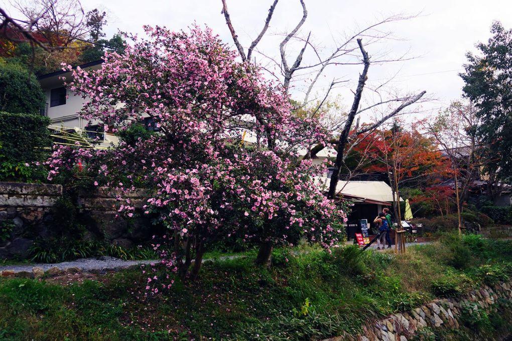 Árboles en flor en Tetsugaku no Michi en Kioto, Japón