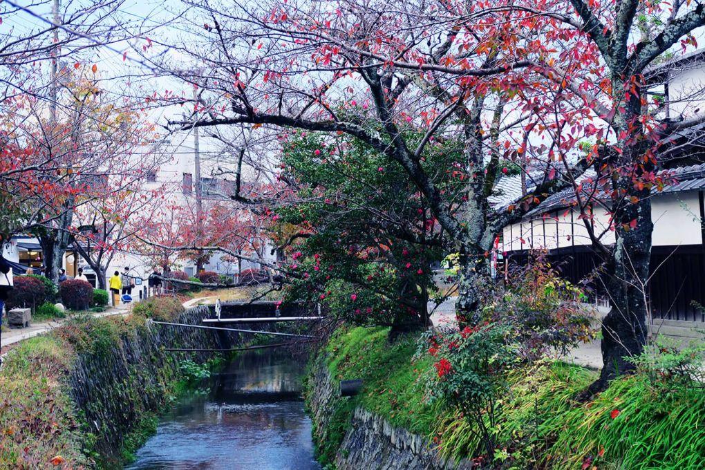 Paseando por Tetsugaku no Michi (El camino del filósofo) en Kioto, Japón
