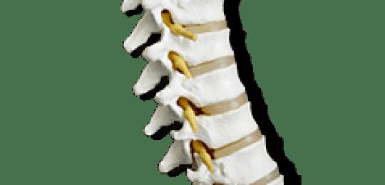 Una espalda sana es sinónimo de bienestar