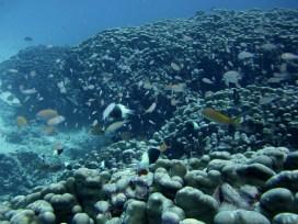 Anne H. Theo. Schooling fish. 2011. Lakshadweep.