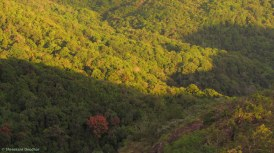 Shreekant Deodhar. Evergreen. 2011. KMTR.
