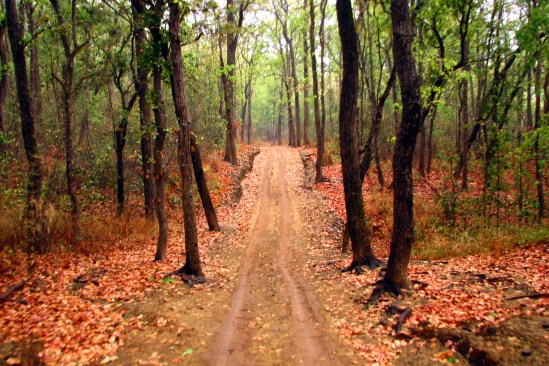 Souvik Mandal. Path through Trees.