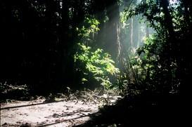 S.P. Vijaykumar. Littoral Jungle. 2003. Katchall Island Nicobar.