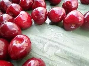 sour-cherry-636956_960_720