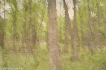 Trees with Overlay