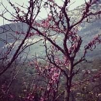 13-printemps
