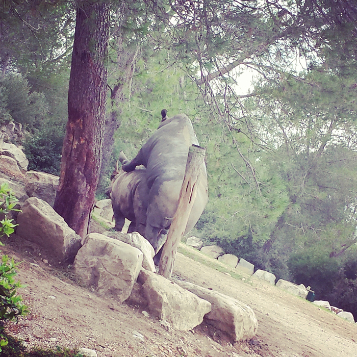 Week-end en famille à Montpellier : Zoo du Lunaret