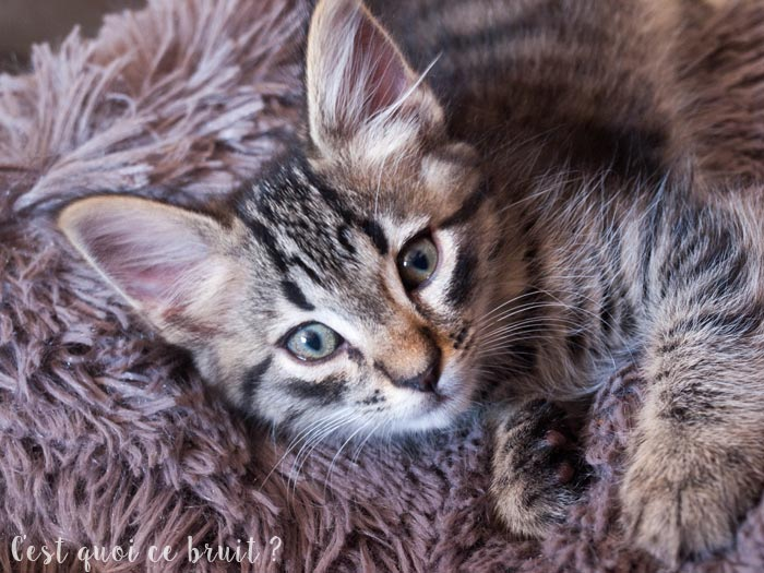 Prendre soin de ses animaux domestiques : mes chatons
