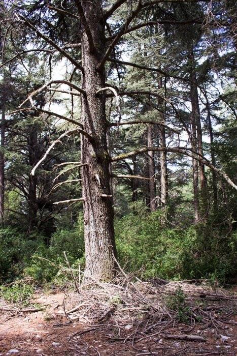 Luberon, randonnée en famille à la forêt des Cèdres