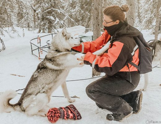 Chien de traîneau en Laponie Finlandaise