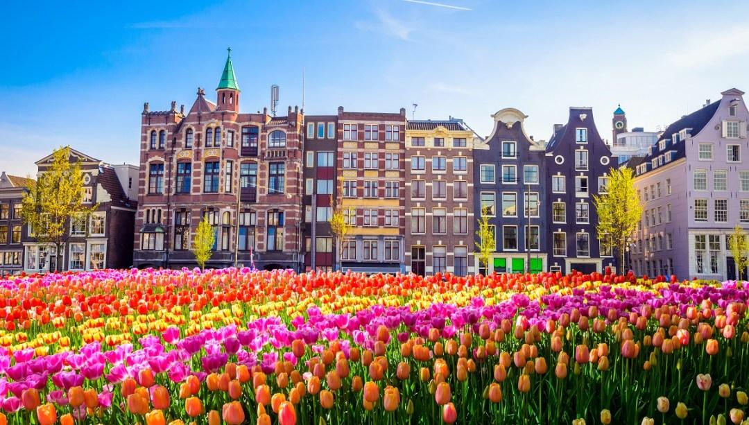 Visiter Amsterdam en famille avec des enfants : les fleurs