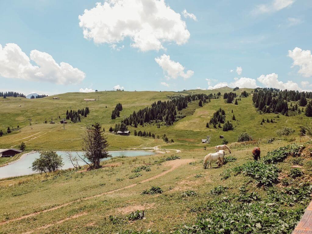 Les paysages de montagne en été : Les Saisies