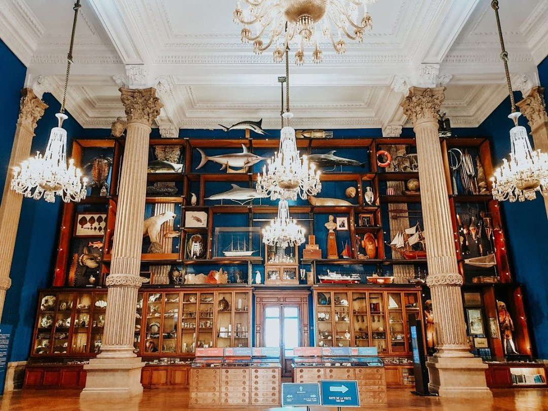 Cabinet des curiosités du Musée Océanographique de Monaco
