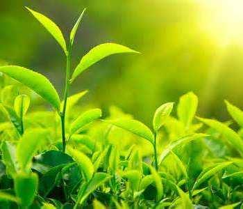 Le piante che ti curano e ti aiutano a stare bene