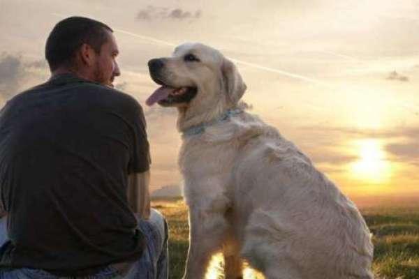 Lettera di un cane al suo padrone ( leggetela e' bellissima )