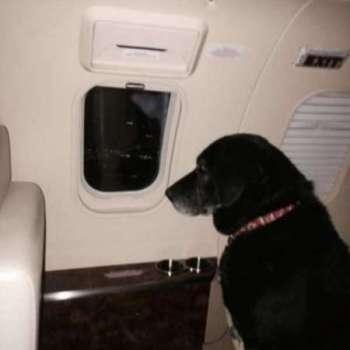 Un cane unico pieno d'amore per tutti..ma con una fine triste..Ciao Lady..