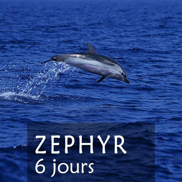 Stages 6 jours Zephyr dauphins et baleines en méditerrannée