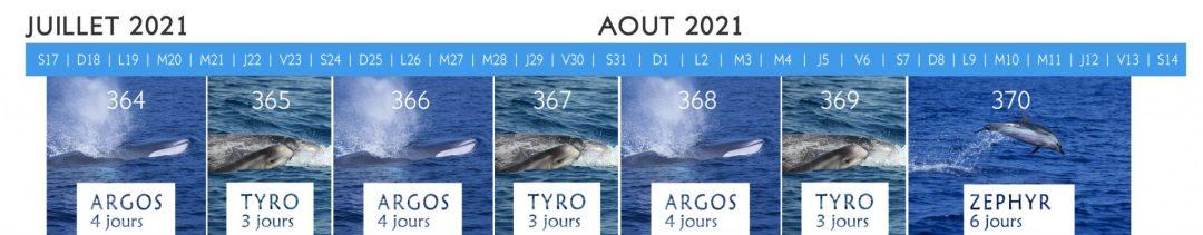 Calendrier stage observation baleines et dauphins de Mediterrannee 2021
