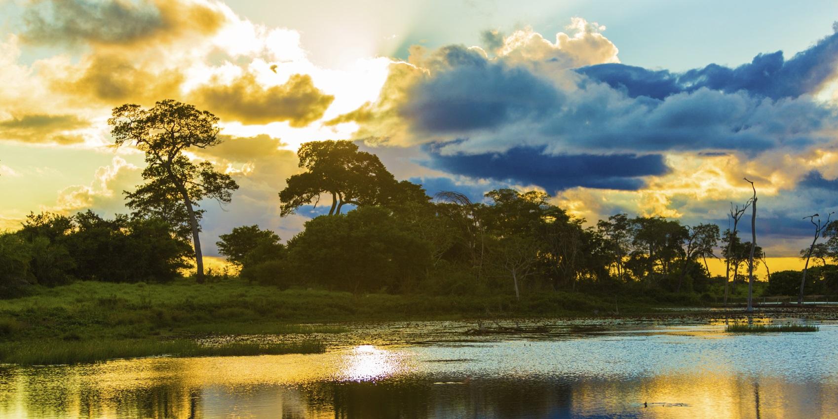 Pantanal River Brazil