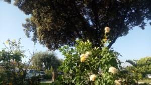 Rosales_View2
