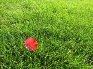 Blatt in gemähtem Gras