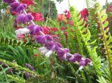 Lila Blüte mit gut getarntem Tier