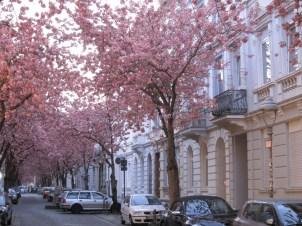 Die blühende Altstadt in den frühen Morgenstunden
