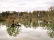 Siegaue und Siegmündung beim alljährlichen Hochwasser
