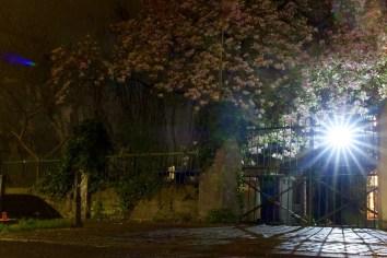 Eine Laterne leuchtet im Magnolienbaum in der Bonner Altstadt