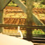 Auf dem Weg in die Uni müssen wir immer die Brücke über den Nil überqueren.