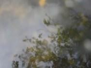Reflexion der Bäume im Fluss