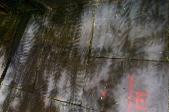 Zwei Straßenlaternen lassen sich die Schatten dieses Baumes auf dem Gehweg kreuzen