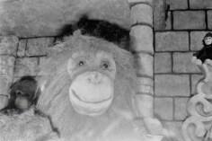 Kleine Affenfamilie im Kaufhof am Münsterplatz