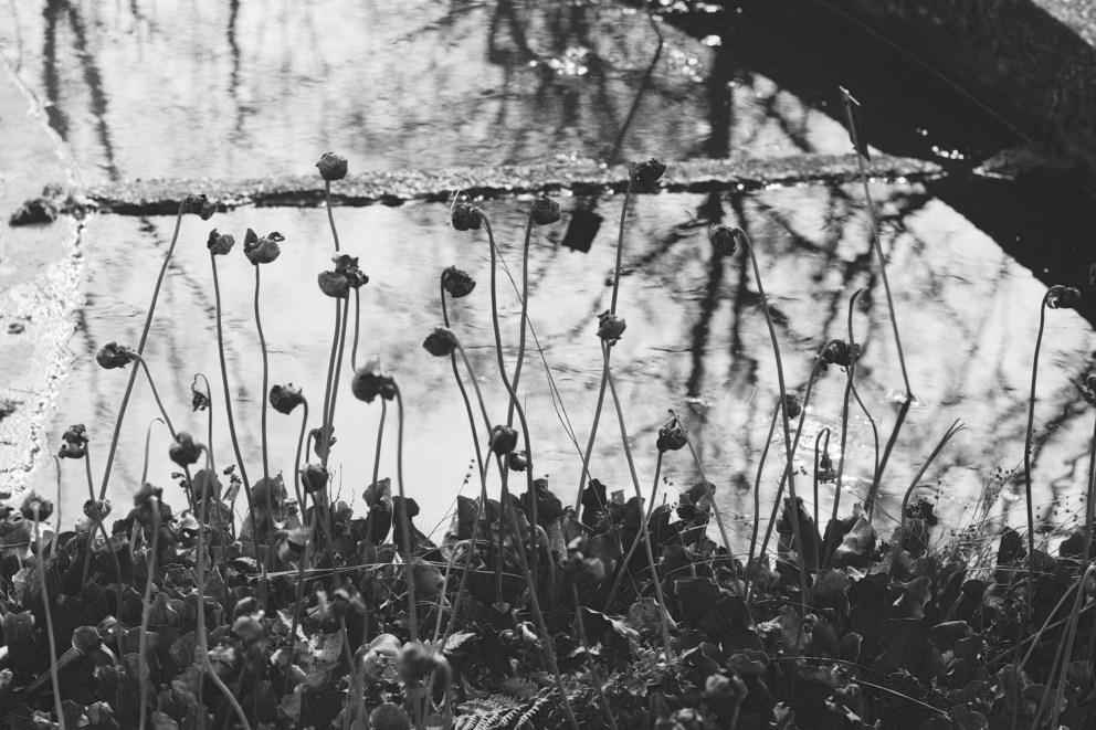 Fokus-Test im Botanischen Garten - 3