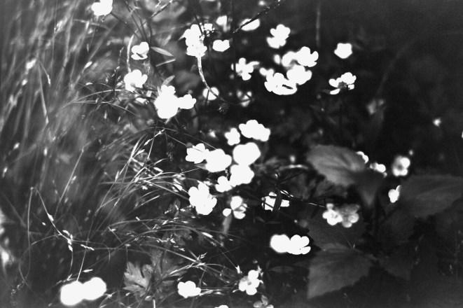 Kleine Waldblümchen am Wegesrand