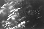 Funkelnde Pflanzen im Licht, am Wegesrand im Wald
