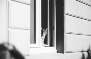 Katze in der Mittagssonne, etwa 2,20 Meter entfernt.