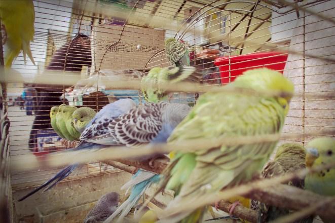 Bunte Vögel bei einem Händler