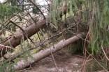 Bei Sturm knicken vor allem die Nadelbäume schnell um. Laubbäume stehen sehr viel fester.